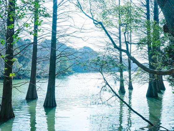 篠栗九大の森 イメージ