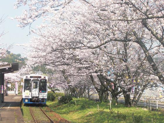 桜の駅イメージ